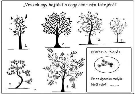 fak_hasonlitgatos.jpg